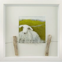 White sheep over the fence